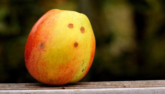 是媽媽說要好好保護蘋果這篇文章的首圖