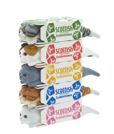 面紙盒中的蘇格蘭折耳貓扭蛋 - 癮科技