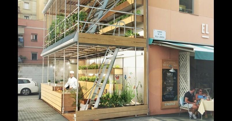 善用大樓外牆建立有機菜園