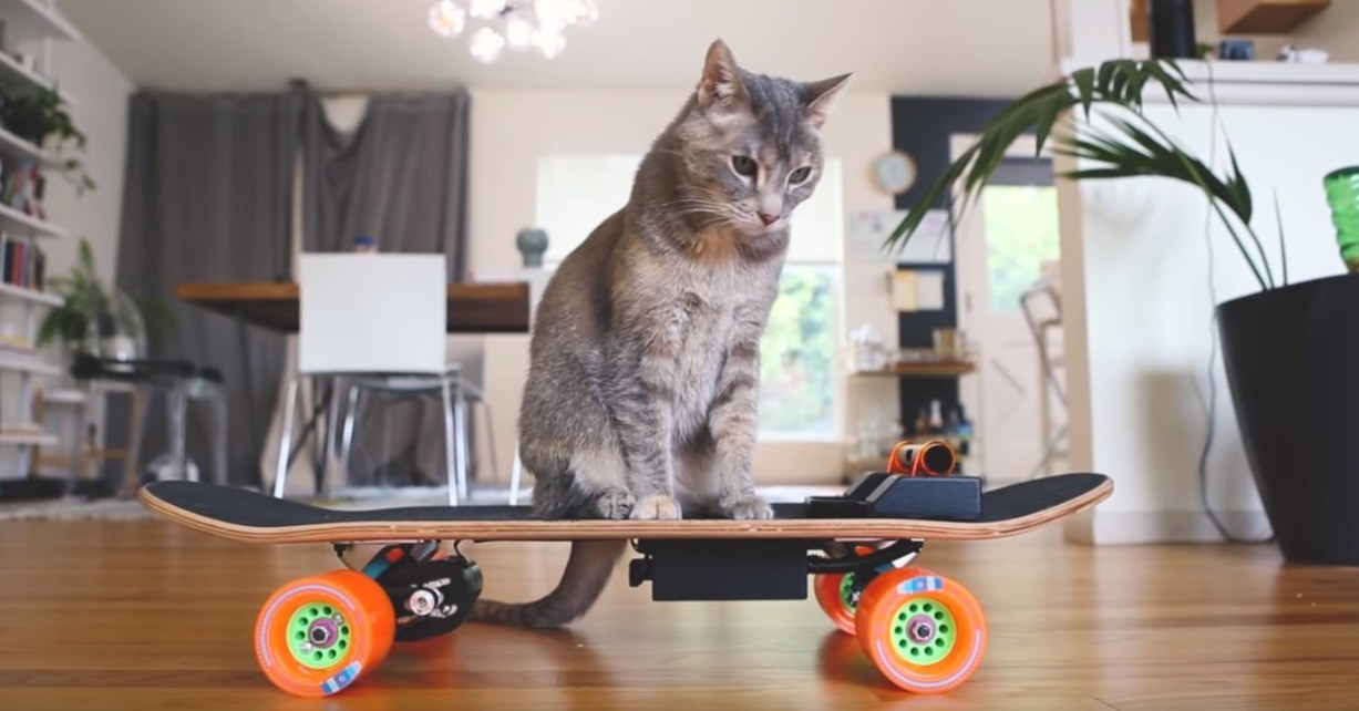 Cat, Skateboard, Electric skateboard, Ollebirde, Skateboarding trick, , , Meme, Internet meme, , Skateboard, cat, small to medium sized cats, cat like mammal, skateboarding equipment and supplies, skateboard, furniture, whiskers, table, kitten, product