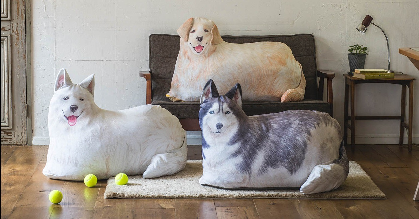 Futon, Dog breed, Dog, , Blanket, Mail order, Cushion, , Tokyo, Humour, cat, dog breed, cat, small to medium sized cats, dog like mammal, dog breed group, cat like mammal, berger blanc suisse