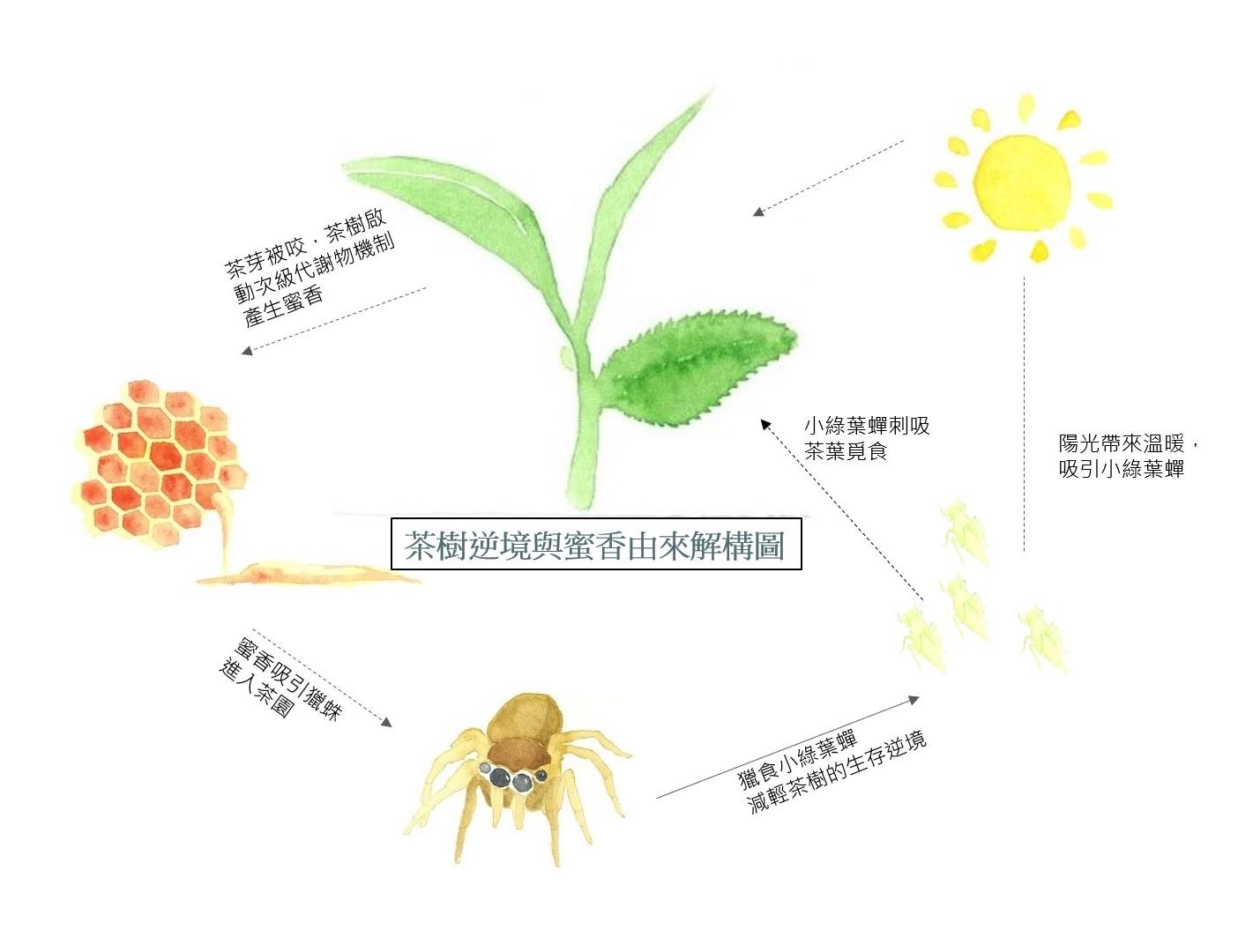 Insect, Lepidoptera, M / 0d, Pollinator, Leaf, Plant stem, Product design, Diagram, Design, Product, leaf, Botany, Plant, Organism, Leaf, Flower, Plant stem