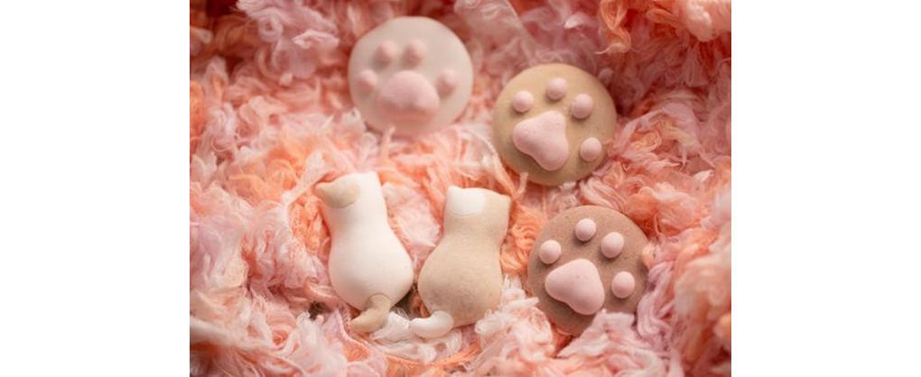 是萌軟肉球棉花糖,讓每個愛貓人都融化這篇文章的首圖