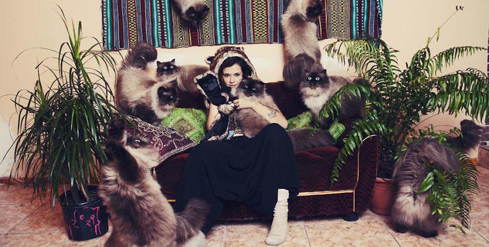 """是每個養貓人都應該要拍的 """"假貓群照片""""這篇文章的首圖"""