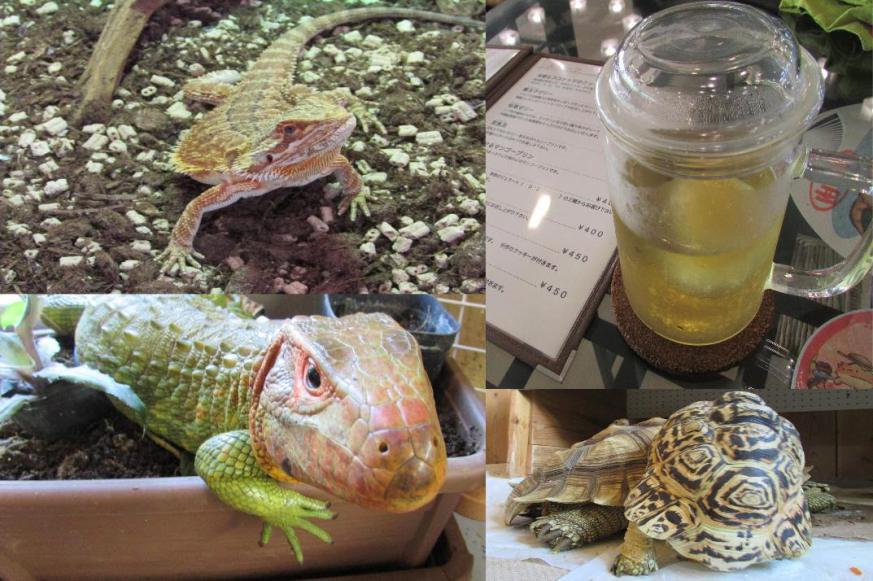 是冷血動物控必去!日本橫濱爬行動物咖啡廳這篇文章的首圖