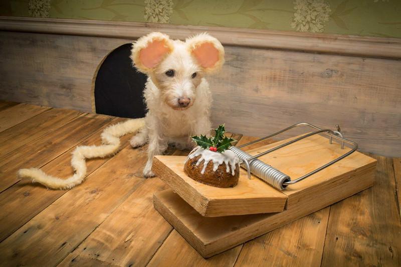 是每年聖誕卡,是由自家小狗扮演不同動物來拍製!這篇文章的首圖