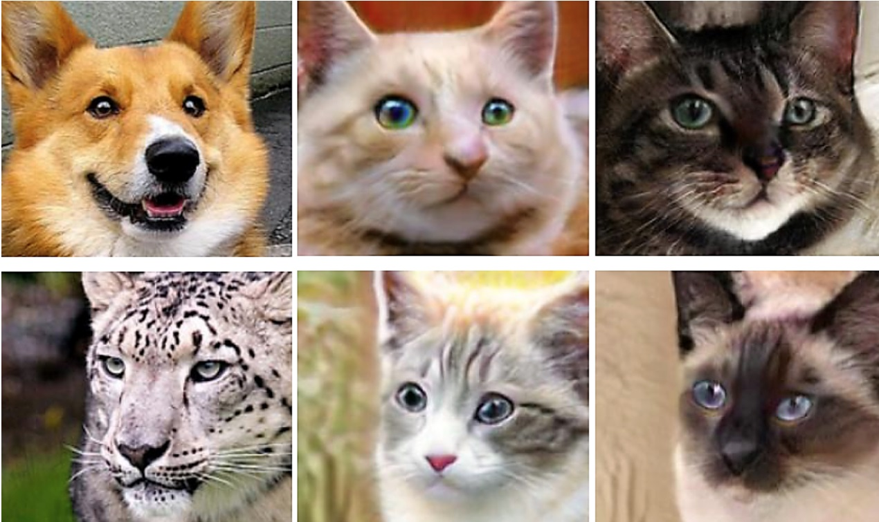 Cat, Deep learning, Research, Tiger, Generative adversarial networks, Dog, Technology, , , Machine learning, Research, cat, fauna, small to medium sized cats, whiskers, dog breed, cat like mammal, wildlife, snout, organism, kitten