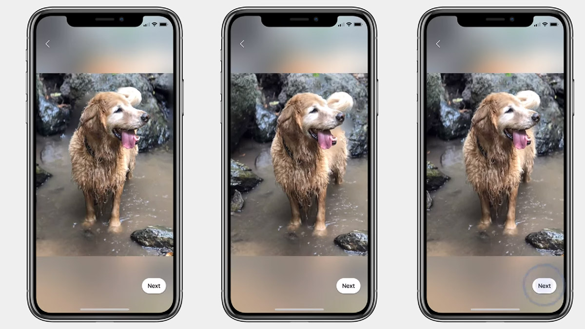 Dog breed, Smartphone, Sporting Group, Dog, , Snout, Breed, iPhone, Mobile Phones, Apple iPhone 4 - 16 GB Smartphone (MC603LL/A) AT&T A1332 6C2, dog, dog, dog like mammal, dog breed, mobile phone, technology, gadget, electronic device, snout, carnivoran, sporting group